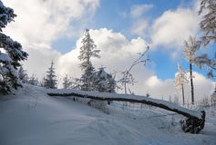 Winter landscape of the mountain forest Stock Photography