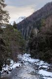 Winter landscape of a mountain river with snow along the coast. River in the Pine Forest in the Caucasus Russia stock photo