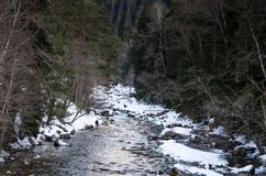 Winter landscape of a mountain river with snow along the coast. River in the Pine Forest in the Caucasus Russia stock photos