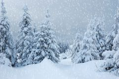 Winter landscape in mountains Stock Photography