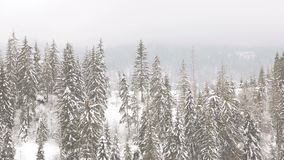 Winter landscape in the mountains. Christmas trees are covered with snow.  stock video footage