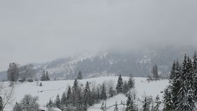 Winter landscape in the mountains. Christmas trees are covered with snow.  stock footage