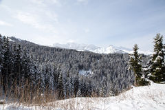 Winter landscape with mountains and forest Stock Images