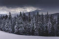 Winter Landscape in mountains. High mountains in clouds. Dramatic sky. View of snow-covered forest. royalty free stock image