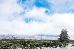 Winter Landscape in the mountains. With snow and cold Royalty Free Stock Images