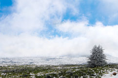 Winter Landscape. In the mountains with snow and cold Royalty Free Stock Photo