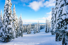 Winter landscape on the mountains with snow covered trees Stock Photography