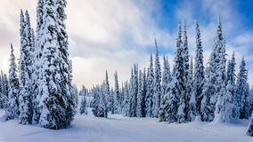 Winter landscape on the mountains with snow covered trees Stock Images