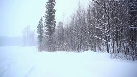 Winter landscape in mountains with snow and snow. Covered trees. Alpine is the climate in spring or autumn when the snow storm comes and sweeps the mountains stock video footage