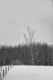 Winter landscape. N black and white Royalty Free Stock Image