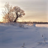 Winter landscape. Nature background Stock Photo