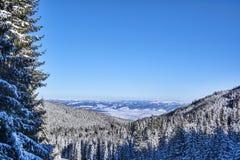 Mountains with snowy forests. Winter landscape near Miercurea Ciuc / Csikszereda, Harghita County, Romania Royalty Free Stock Photos