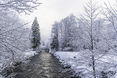 Winter landscape near small river. White forest with snow Royalty Free Stock Photography