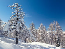 Winter landscape near Vogel ski center in mountains Julian Alps Royalty Free Stock Photography
