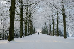 Winter landscape in the Netherlands Royalty Free Stock Image