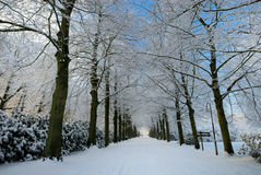 Winter landscape in the Netherlands. Beautiful winter landscape in the Netherlands ( Elswout Overveen stock images