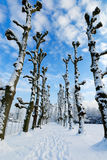 Winter landscape in the Netherlands. Beautiful winter landscape in the Netherlands ( Elswout Overveen stock photos