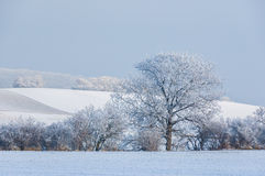 Landscape in fresh snow. With new snow wintry sugared landscape stock photography