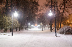Winter landscape at the night - alley in the park Stock Photography