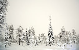 Forest Winter at night Royalty Free Stock Photo