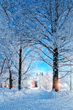 Winter landscape night scene - deserted snowy walkway with snowfall and snowy trees in the night Royalty Free Stock Image