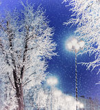 Winter landscape night view with shining lantern among the frosty trees and falling snow Stock Photography
