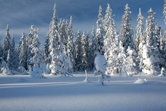 Winter landscape in Norway. stock photos