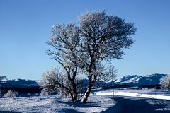 Winter Landscape in Norway Royalty Free Stock Images