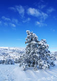Winter landscape O. Spruce trees covered by snow in beautiful winter landscape Royalty Free Stock Images