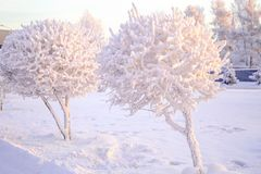 Free Winter Landscape Of Frosty Trees, White Snow In City Park. Trees Covered With Snow In Siberia, Irkutsk Near Lake Baikal. Extremely Royalty Free Stock Image - 163551756
