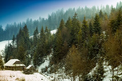 Winter landscape with old farm in the spruce forest Royalty Free Stock Photography