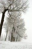 Winter landscape with old road tree alley and fog Royalty Free Stock Images