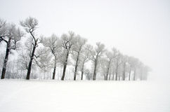 Winter landscape with old road tree alley and mist Stock Photos