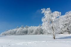 Winter landscape. One tree standing in the middle of a snow-covered hoarfrost is covered with frost on a sunny frosty. Winter landscape. One tree standing in the stock photos
