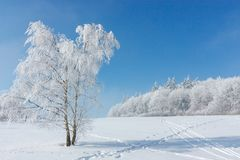 Winter landscape. One tree standing in the middle of a snow-covered hoarfrost is covered with frost on a sunny frosty. Winter landscape. One tree standing in the stock photo
