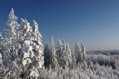 Winter landscape over forest Royalty Free Stock Photography