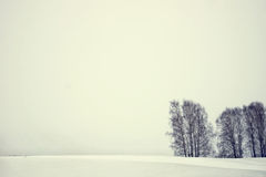 Winter landscape in an overcast day Royalty Free Stock Images