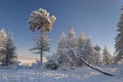 Winter landscape of Oymyakon.  Yakutia, Russia. Winter landscapes of Oymyakon - the pole of cold of the Northern Hemisphere. Yakutia, Russia royalty free stock images