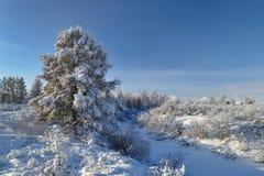Winter landscape of Oymyakon.  Yakutia, Russia. Winter landscapes of Oymyakon - the pole of cold of the Northern Hemisphere. Yakutia, Russia royalty free stock photo