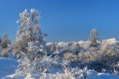 Winter landscape of Oymyakon.  Yakutia, Russia. Winter landscapes of Oymyakon - the pole of cold of the Northern Hemisphere. Yakutia, Russia royalty free stock photos