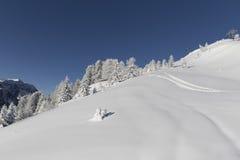 Winter Landscape Stock Images