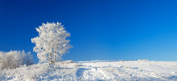 Winter landscape a panorama with the blue sky, a field and the o Royalty Free Stock Photo