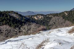 Panoramic view of the mountains. Winter landscape. Panoramic view of the mountains in the distance, a spruces and ice-covered trees on a winter evening at sunset Stock Photography