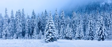 Free Winter Landscape. Panoramic Winter Forest. Snowy Christmas Trees In Mountains. Frosty Nature In Mountain Valley Royalty Free Stock Photos - 160731338