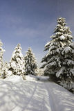 Winter landscape in a park Royalty Free Stock Photography