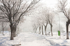 Winter landscape in the park Royalty Free Stock Images