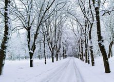 Winter landscape in park. A beautiful alley in the park in winter Stock Photos