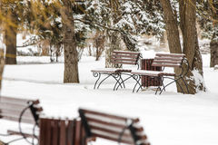 Winter landscape park with benches in foreground Royalty Free Stock Image