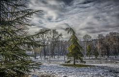 Winter Landscape. A park covered with snow Royalty Free Stock Images