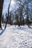 Winter landscape  in the park. Winter landscape in the park in Europe Royalty Free Stock Photo
